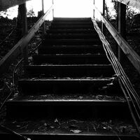Mystic Falls Woods