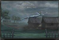White dragonling.jpg