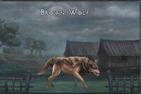 Brown wolf.jpg