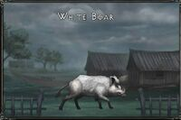 White boar.jpg