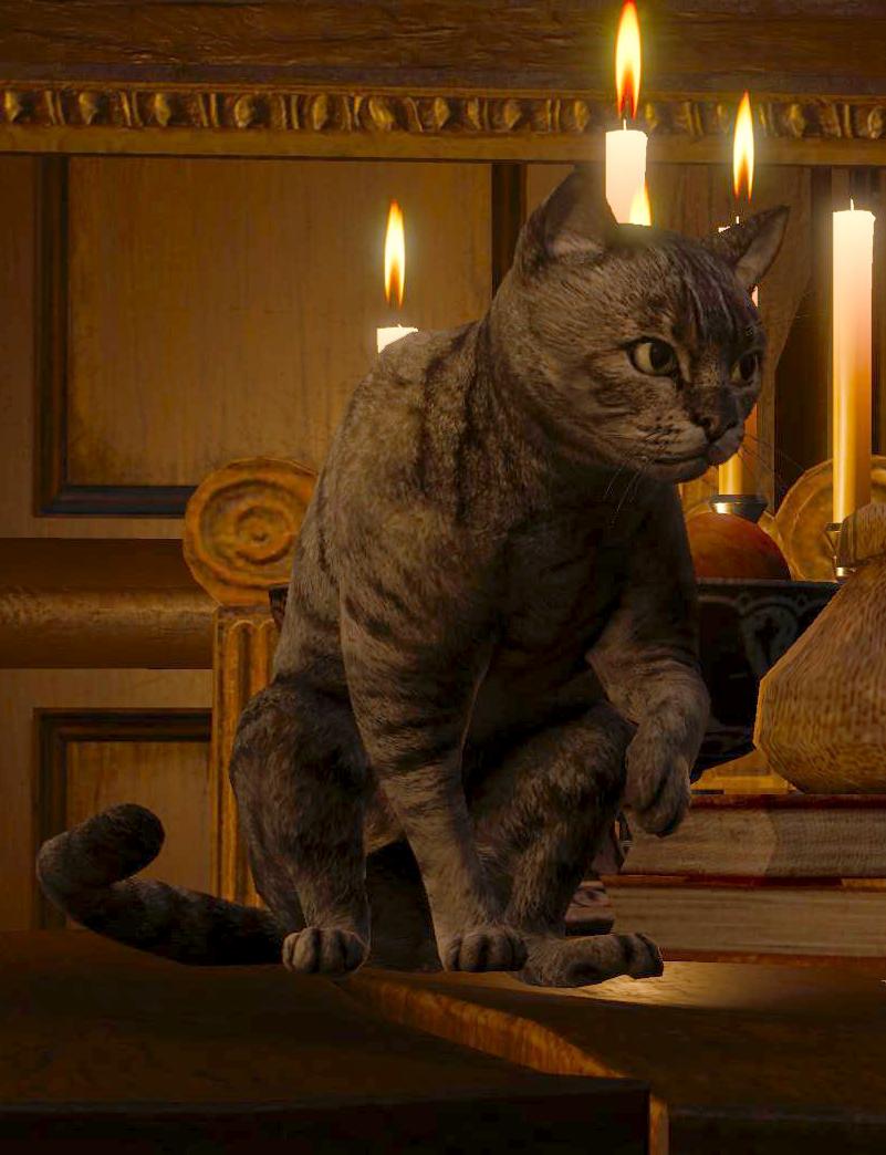 Кошка (существо)