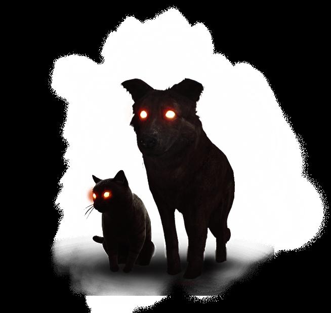 Черный кот и черный пес
