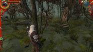 Лес на болотах3В1
