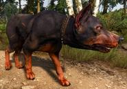 Собака3В3