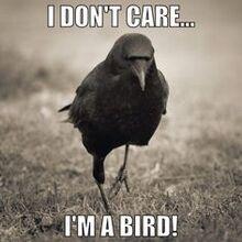 Ima bird.jpg
