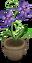Potted Violet Flower.png
