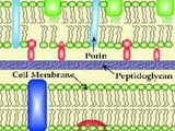 Bacteria pathogenesis 3