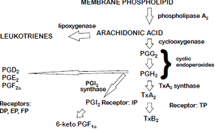 Eicosanoids.png