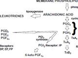 Analgesics, aspirin and NSAIDs