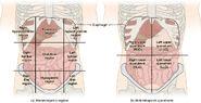 Abdominal Regions and Quadrants
