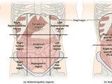 MED2031 Anatomy - Abdomen
