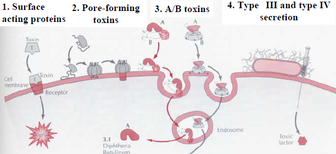 Endotoxin.png