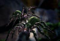 SpiderHatchling.jpg