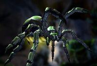 SpiderMatron.jpg