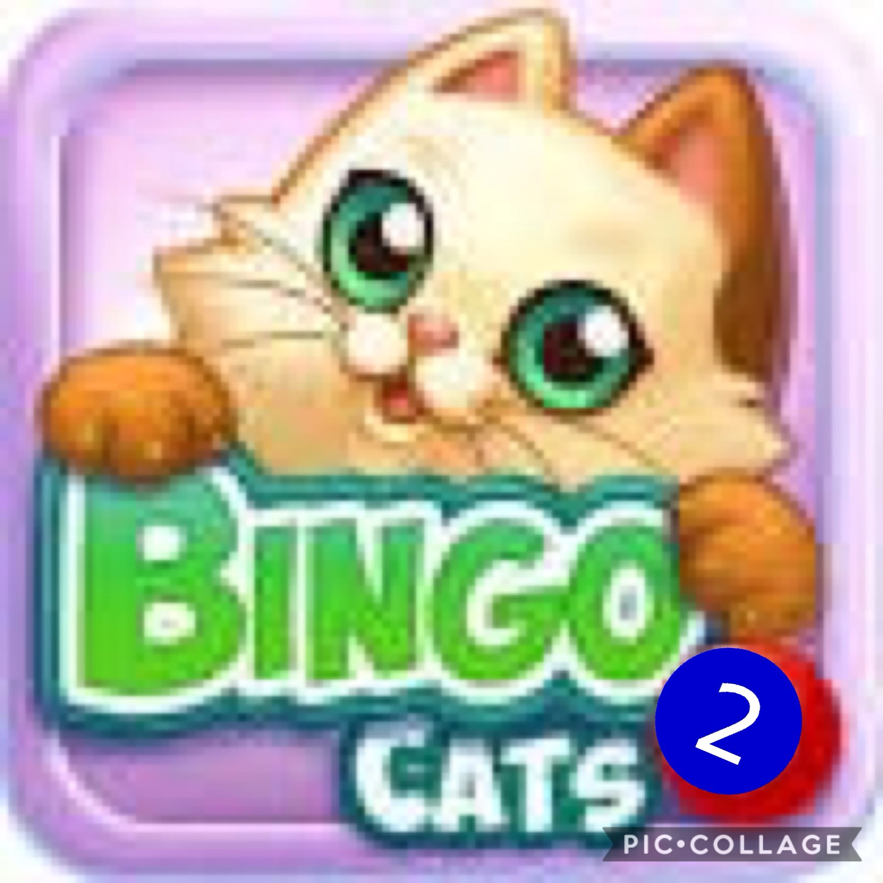 Bingo Cat 2
