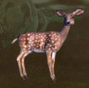 Forest fawn.png
