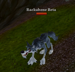 Rackabone Beta