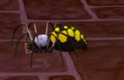 Barn spider.png