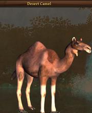 Desert camel.png