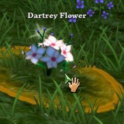 Flower of Dartrey