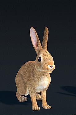 Wild bunny.png