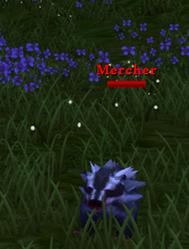 Mercher