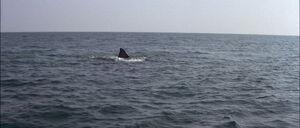 Jaws2-movie-screencaps com-13035