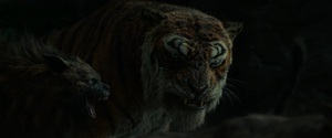 Shere Khan Sees Mowgli Again