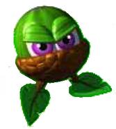Evil acorns