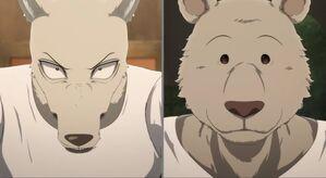 Legoshi and Riz anime 11