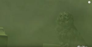 The Mist Owl