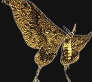 Noctpteran
