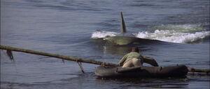 Jaws2-movie-screencaps com-13158