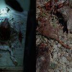 Rats-walking-dead-spoilers-lizzie-to-kill-again.jpeg
