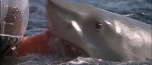 Jaws2-movie-screencaps com-10884