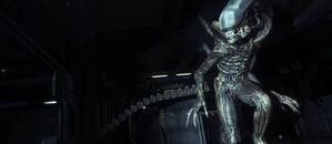 Alien-isolation-gallery-1