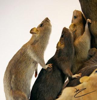 Rats (Welkin Weasels)