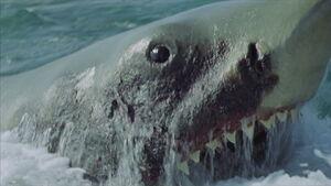 645183542-jaws-2-film-awaken-fin-animal-shark-fish