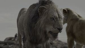Hyena Eat Before Lion