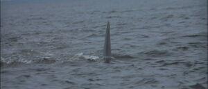 Jaws2-movie-screencaps com-8667