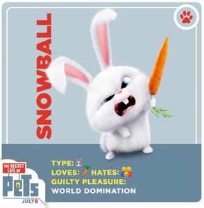 Snowball bunny