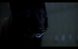 Teen Wolf Season05 Episode02 Parasomnia Theo as full wolf