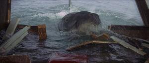 Jaws-movie-screencaps com-14072