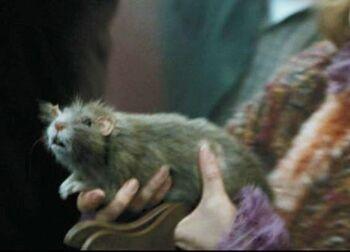 Scabbers (Film)