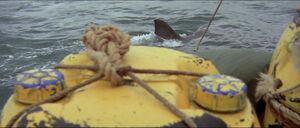 Jaws-movie-screencaps com-12028