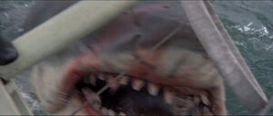 Jaws-movie-screencaps com-14207