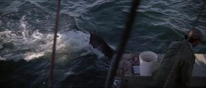 Jaws-movie-screencaps com-9714
