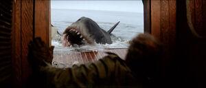 Jaws-movie-screencaps com-13904