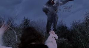 Grey Werewolf shot
