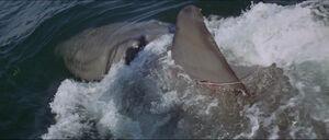 Jaws-movie-screencaps com-11801